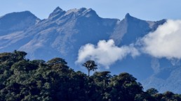 Ecosistemas andinos: una diversidad preciada