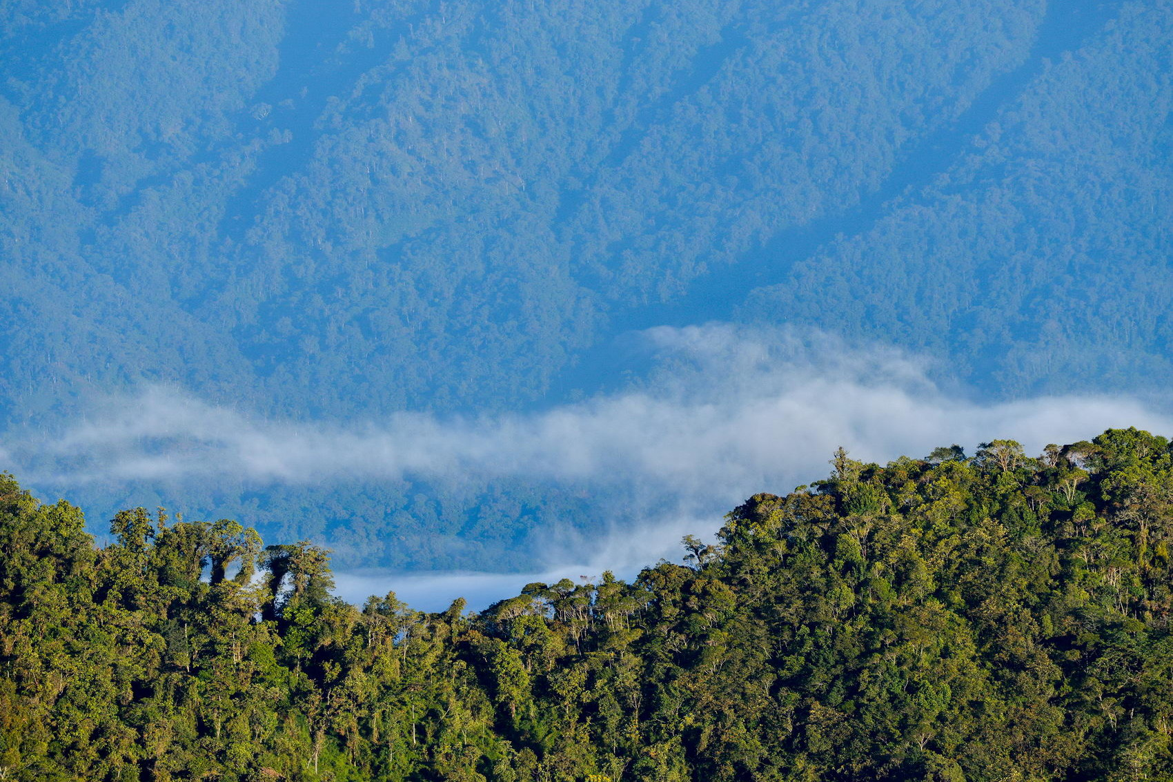 Reserva del Mashpi, protegiendo los bosques andinos