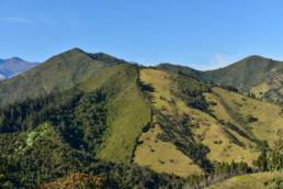 Yunguilla, una nueva visión hacia bosques sostenibles