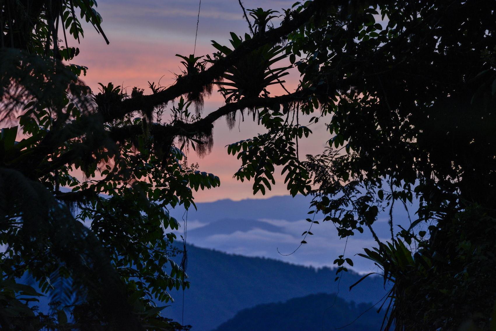 Bosque Bellavista reserva privada pionera en Ecuador