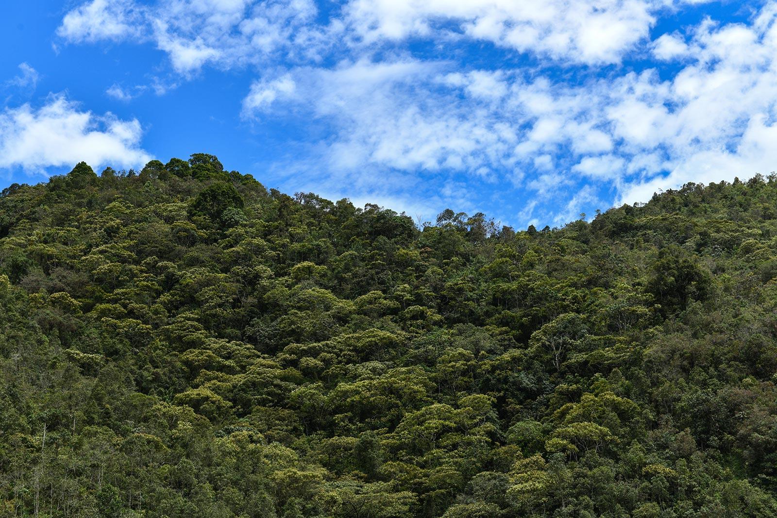 Reserva Alto de San Miguel